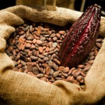 cacao-fruit-beans-ecuador1